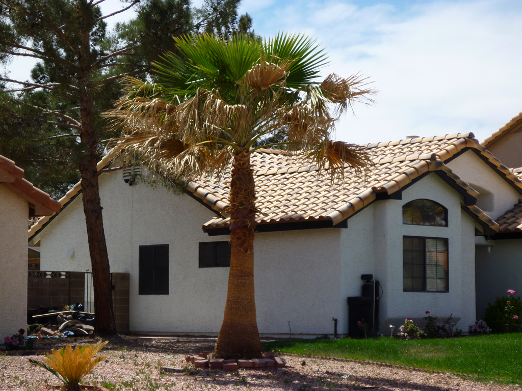Affordable Tree Service Skinning Mexican Palm Tree